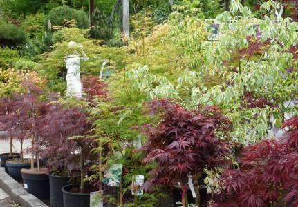 Gartencenter Hilgert   Baumschule und Stauden